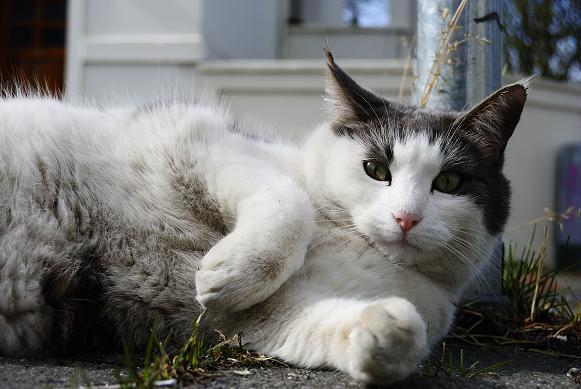 Katze auf dem Bürgersteig
