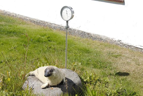 Ausgestopfte Robbe im Vorgarten gefällig?