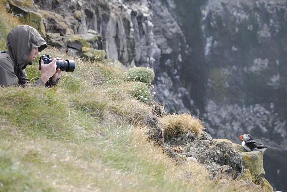 Aber das Highlight war definitiv Látrabjarg, Europa's westlichster Punkt und westlichste Klippe, die ein Vogelparadies ist