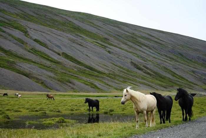 Pferde auf dem Weg