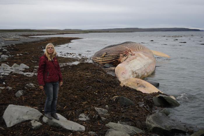 Obligatorisches Touristenfoto mit dem Wal