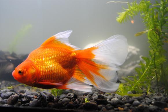 Der Größte unter den Fischen